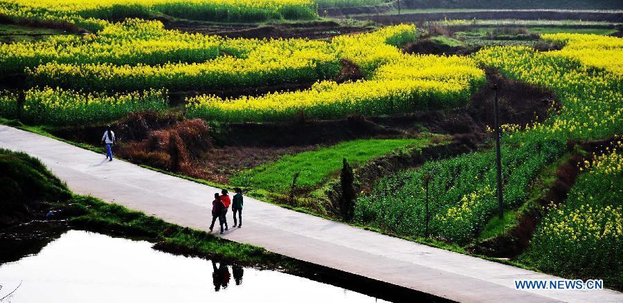 Villagers walk on a country road with cole flowers in blossom in Dukou Township of Anren County in C ...