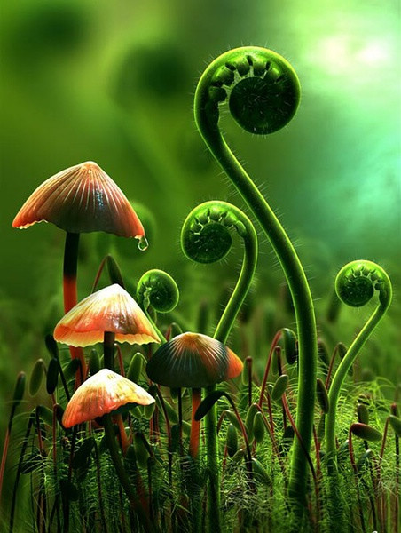 菇類如此繽紛/Colorful  Lovely Mushrooms ** - 兰绿相间  - 兰绿相间