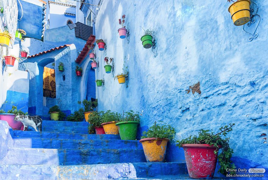Chefchaouen-the-blue-pearl-of-Morocco-58e630a326c23-png__880.jpg