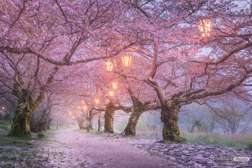 amazing-places-japan-23-57512c59d504f__880.jpg