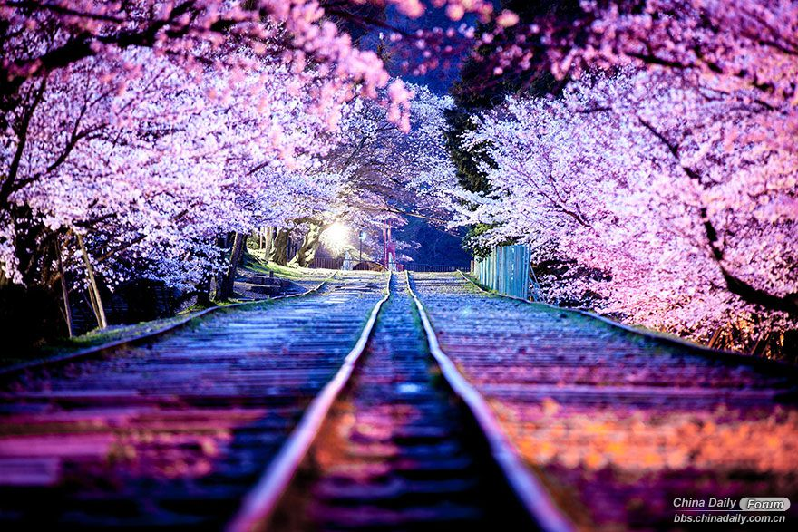 amazing-places-japan-39-57556d9bef334__880.jpg