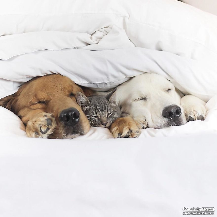 This-friendship-between-these-two-dogs-and-this-kitten-will-love-you-5a205d2ca3b.jpg