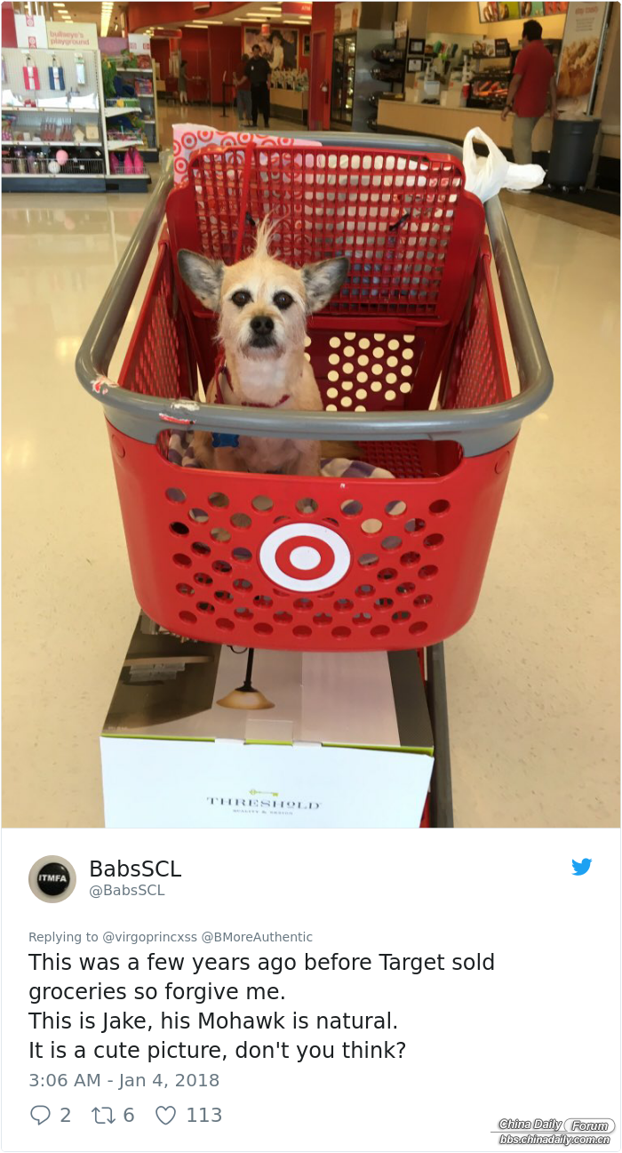 happy-dog-shopping-target-zira-the-corgi-virgoprincxss-2 (1).png