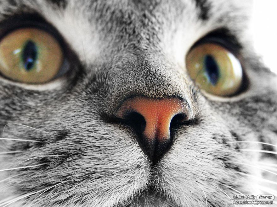 cat-noses-macro-photography-5a58adaf918eb__880.jpg